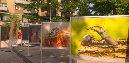 wystawa Natura 2000